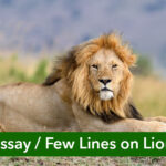 Few Lines on Lion