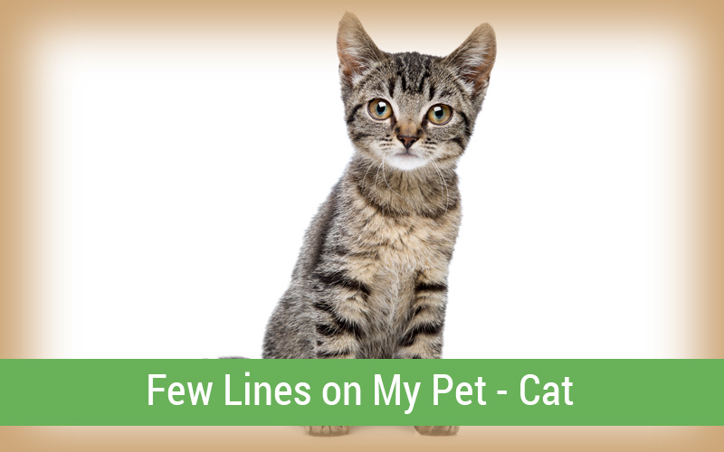 Few Lines on My Pet – Cat