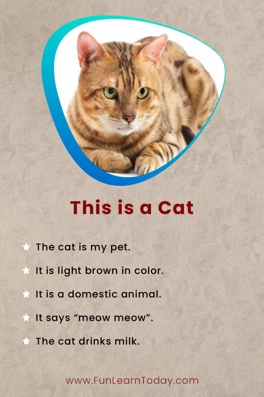 This is a cat