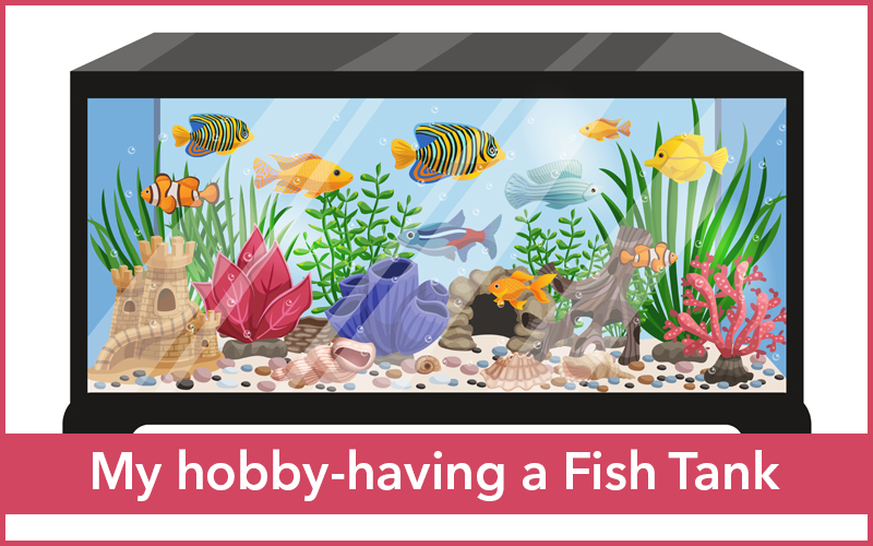 My hobby-having a Fish Tank