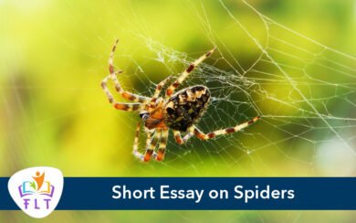 Short Essay on Spiders