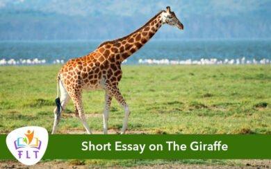 Short Essay on The Giraffe